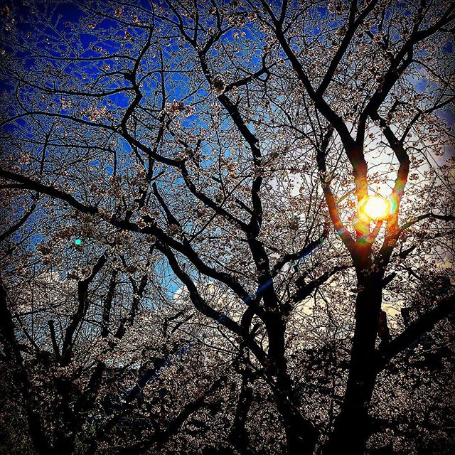 #japan #sakura #spring